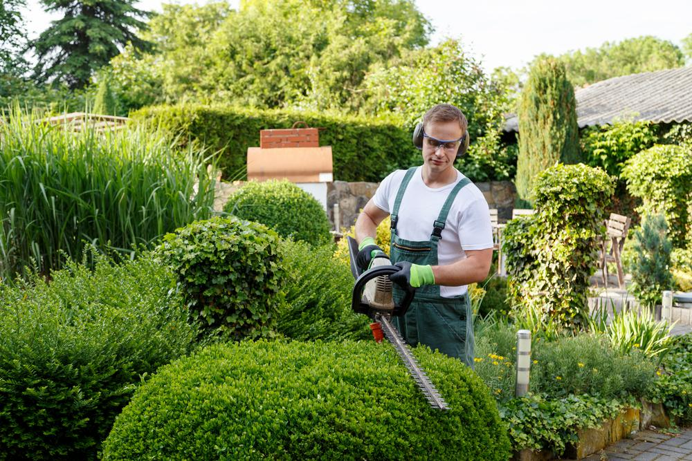 offre emploi urgent recrute paysagiste